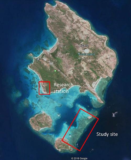 Lizard Island study site